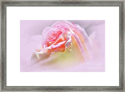 Peaceful Pink Rose Haze Framed Print