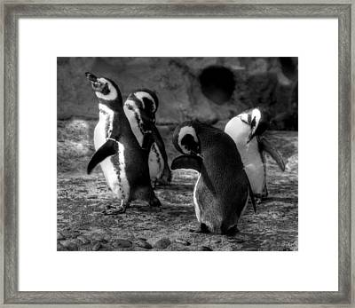 Penguin's Framed Print