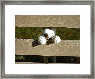 Pooch Prisoner Framed Print by Sadie Reneau