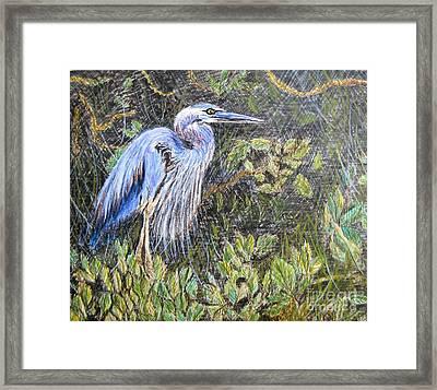 Ptg  Blue Heron Framed Print by Judy Via-Wolff