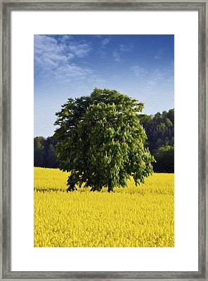 Rapeseed Field  Framed Print by Aged Pixel