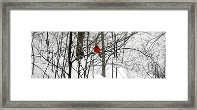 Red Wings In The Woodland Framed Print by Dina  Stillwell
