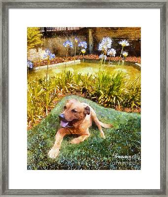 Framed Print featuring the painting Alameda Rufus by Linda Weinstock