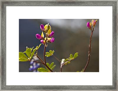 Right Side Up Framed Print by Jon Glaser