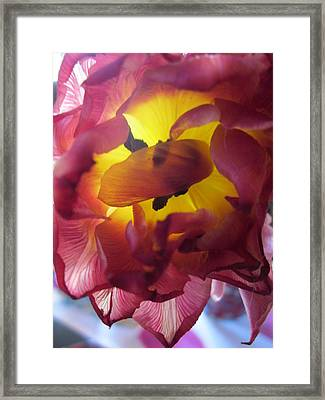 Rip Framed Print