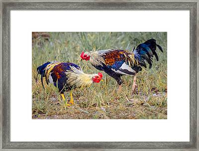 Rural Roosters Framed Print