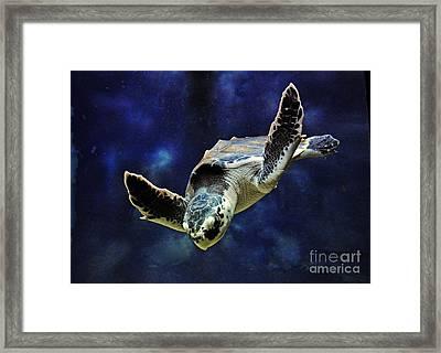 Framed Print featuring the photograph  Sea Turtle by Savannah Gibbs