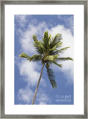 Framed Print featuring the photograph  Sky And Palm Tree With Coconuts by Bryan Mullennix