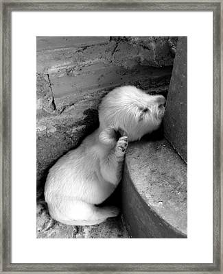 Sleep Well Framed Print by Michelle Meenawong