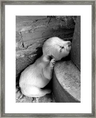 Sleep Well Framed Print