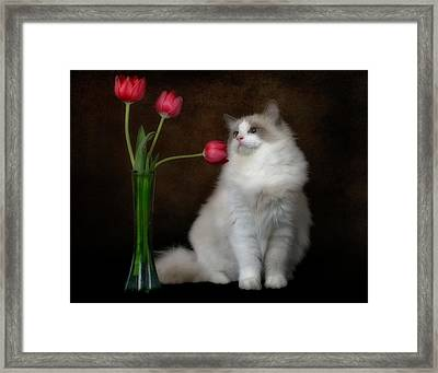 Smell The Flowers Framed Print by David and Carol Kelly