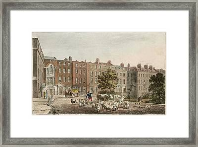 Soho Square, With Cattle         Date Framed Print by Mary Evans Picture Library