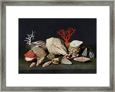 Still Life With Shells And Coral Framed Print by Jacques Linard