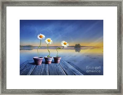 Summer Morning Magic Framed Print by Veikko Suikkanen
