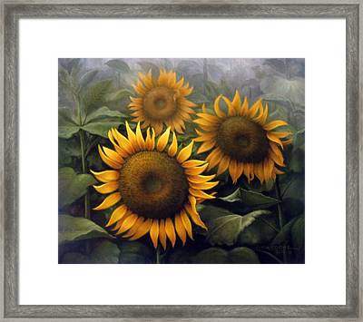 Sunflower 4 Framed Print