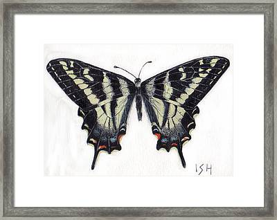 Swallowtail Butterfly  Framed Print by Inger Hutton
