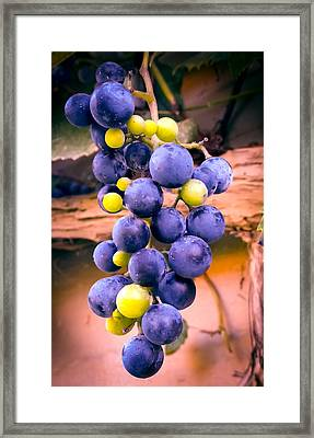 Taste Of Nature Framed Print by Karen Wiles