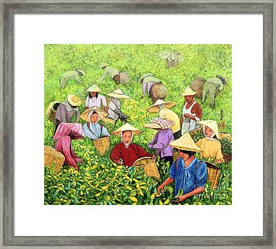 Tea Picking Girl Framed Print by Komi Chen