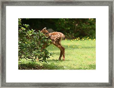 That Is My Head On My Body Framed Print by Kym Backland