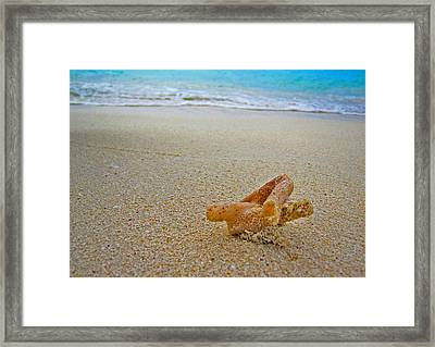 The Coral Were Cast Away On The Gold Dust Island. Art On Maldives. Calm After The Storm. Framed Print