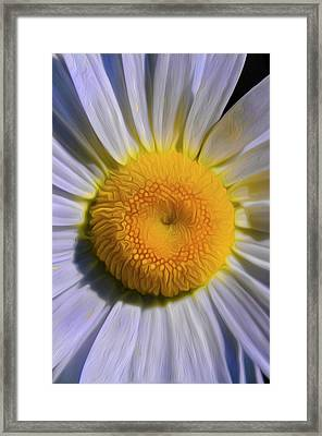 The Dainty Daisy Framed Print