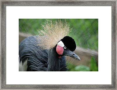 Framed Print featuring the photograph  The Doo by Kathy Gibbons