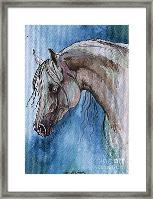 The Grey Arabian Horse 5 Framed Print
