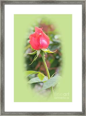 The Heart Of The Rose Framed Print