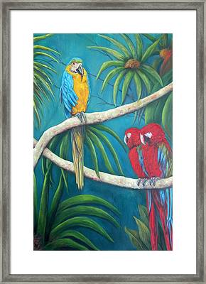 Three Is A Crowd,macaws Framed Print