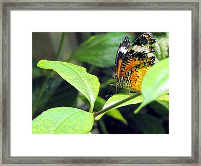 Tiger Wings Framed Print by Jennifer Wheatley Wolf