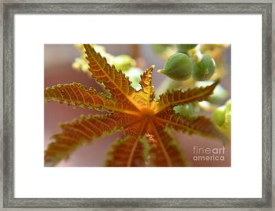 Transparency Framed Print by Michelle Meenawong