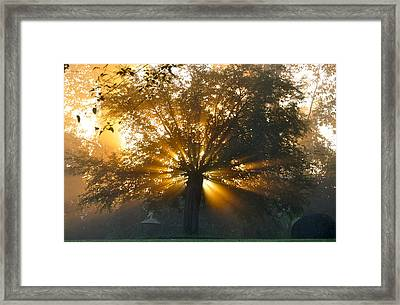 Tree Burst Framed Print by David Flitman