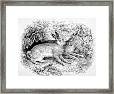 Two Hares Framed Print