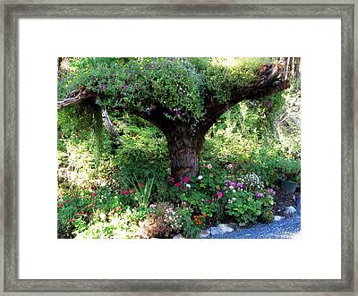 Framed Print featuring the photograph  Upside Down Tree by Jennifer Wheatley Wolf