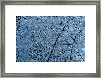 Vegetation After Ice Storm  Framed Print by Daniel Reed