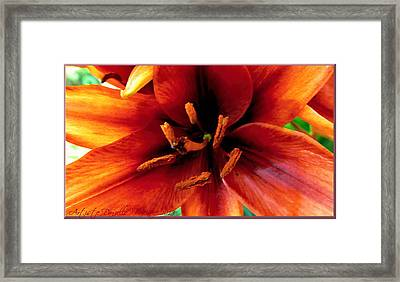 Vertical Orange Lily Macro  Framed Print by Danielle  Parent