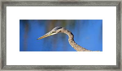 Vigilence Framed Print by Donald Cramer