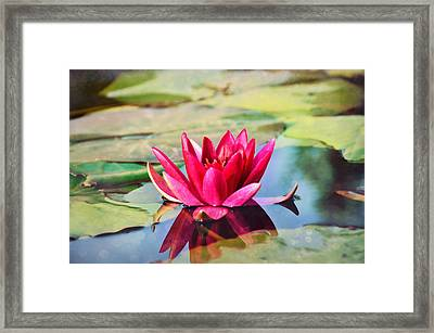 Water Lily Framed Print by Gynt