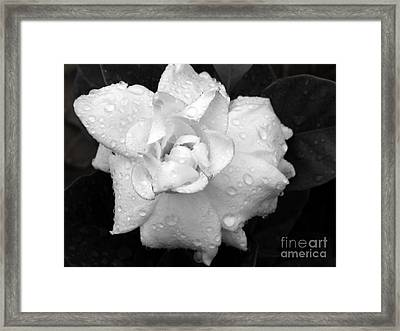 White Drops Framed Print by Michelle Meenawong