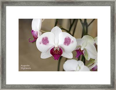 White Orchids And Landscape Framed Print