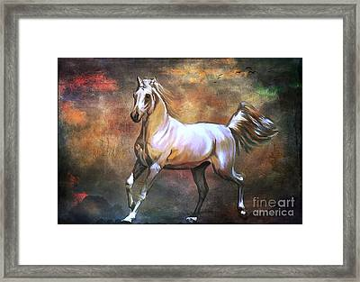 Wild Horse. Framed Print
