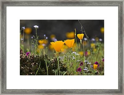 Wildflowers Explode Framed Print