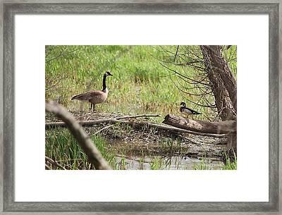 Wildlife Scenery Framed Print