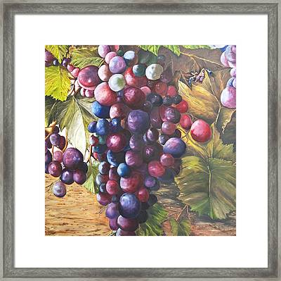 Wine Grapes On A Vine Framed Print by Chuck Gebhardt