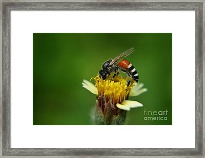 Working Bee Framed Print by Michelle Meenawong