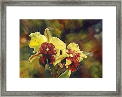 Yellow And Red Cattleya Orchids Framed Print by Alfred Ng