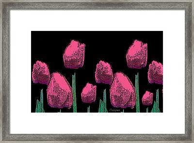 010 Hot Pink Tulips 2a Framed Print