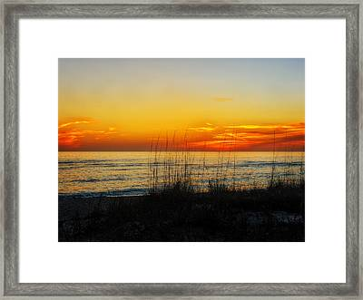 Sunset And Sea Oats On The Florida Gulf Coast Framed Print