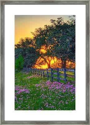 0250-0259-74 Framed Print
