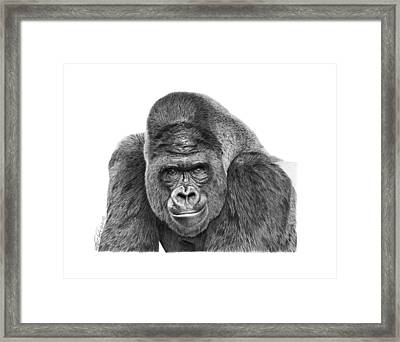 042 - Gomer The Silverback Gorilla Framed Print by Abbey Noelle